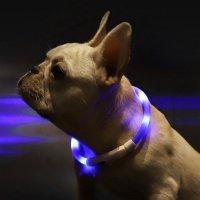 Ошейник для собак Xiaomi Small Beast Star Pet Collar (XL81-5001)